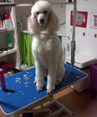 Peluquería Canina Mimi