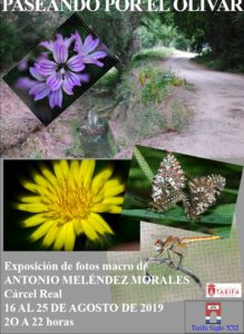 Exposicion Fotografica Paseando por El Olivar Tarifa 2019